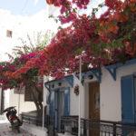 ナクソス島の赤い花 2015年6月撮影