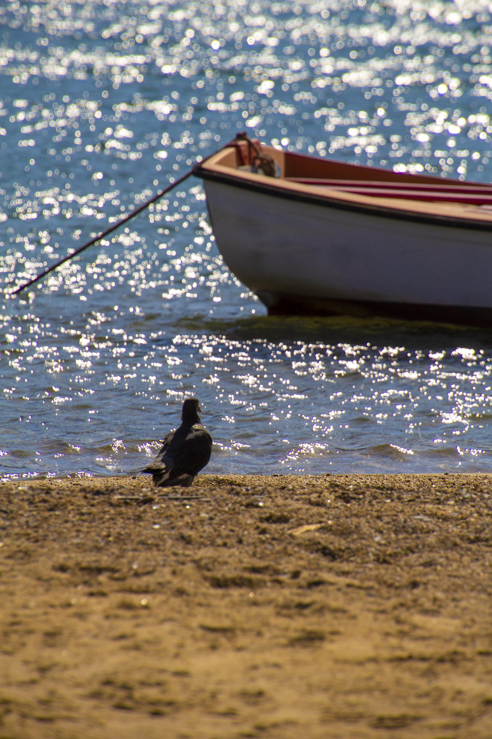 ミコノス島の朝