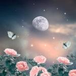 秋の月夜と花と蝶々 PictCloudスキャンサービス