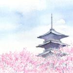 水彩画 桜 スキャン 1200dpi